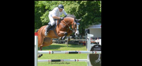 Qualitätspferde zu vernünftigen Preisen!